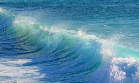 Los Océanos y el Medio Ambiente son nuestros aliados